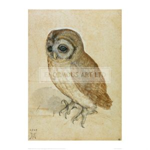 DUR002 Little Owl, 1508