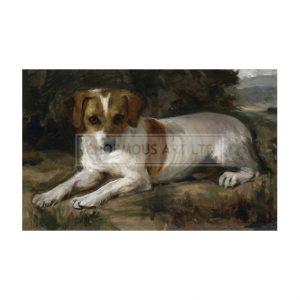 SOR003 Dog