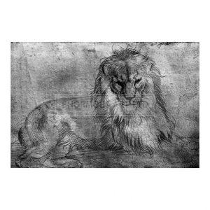DUR033 Lion