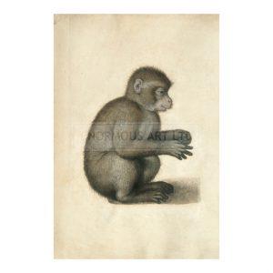 DUR036 Monkey
