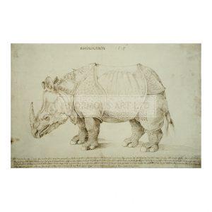 DUR063 Rhinoceros (2)