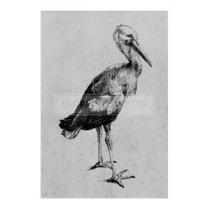 DUR071 Stork