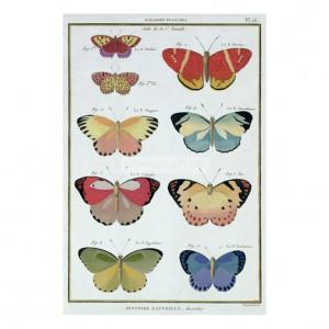 BEN002 Butterflies, 'Histoire Naturelle des Insectes'