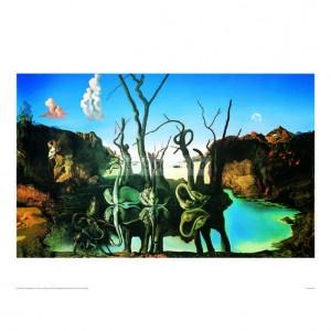 SA001 Swans Reflecting Elephants