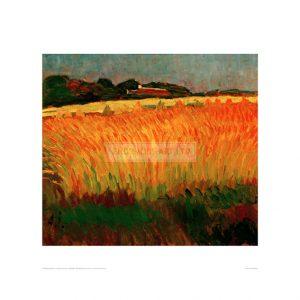 JAW003  Corn field near Carantec, 1905
