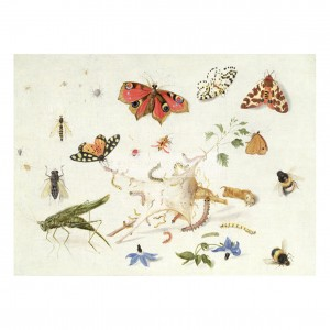 KES001 Butterflies and Insects, 1661
