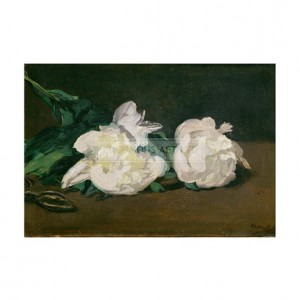 MAN026 Branch of White Peonies with Secateurs
