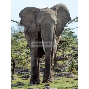 BMF003  African Elephant Approach Full Bleed