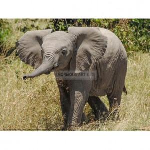 BMF020  Elephant Calf Trumpet Full Bleed