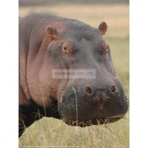 BMF022  Head of a Hippo Full Bleed