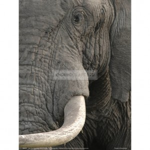 BMF031  Eye of an Elephant Full Bleed