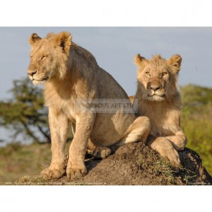 BMF042  Lionesses on the Look Out Full Bleed
