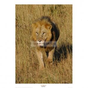 MF002 Lion Approach