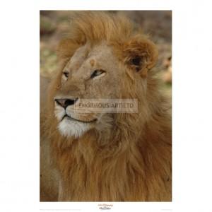 MF005 Majestic Lion