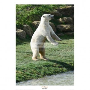 MF011 Polar Bear Standing Up