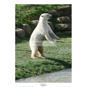 MF011 Polar Bear Standing Up