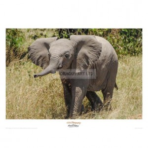 MF020 Elephant Calf Trumpet