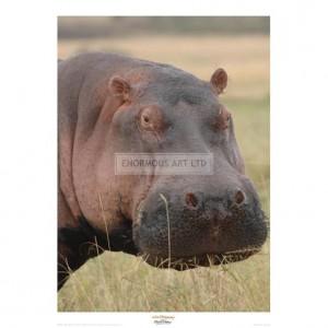 MF022 Head of a Hippo