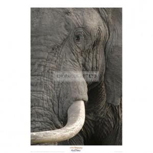 MF031 Eye of an Elephant
