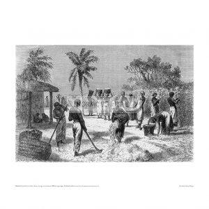 SLA014 Uncle Tom's Cabin, Slaves During Cotton Harvest, 1885