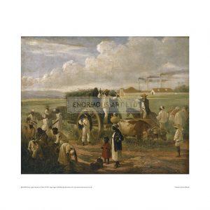 SLA046 Cane Sugar Harvest in Cuba, 1874