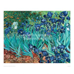 VAN020 Irises