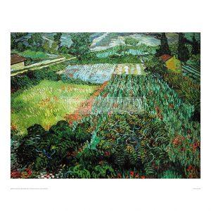 VAN048 Field with Poppies