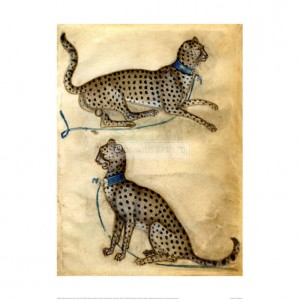 MA086 Two Studies of a Cheetah with a Blue Collar and Leash